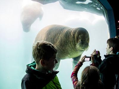 Walross mit Besuchern_Tierpark Hagenbeck