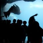 Zoo 2017 (123)