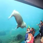 Zoo 2017 (138)