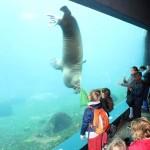 Zoo 2017 (139)