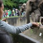 Zoo 2017 (43)