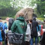 Zoo 2017 (54)