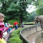 Zoo 2017 (58)
