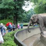 Zoo 2017 (60)