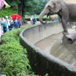 Zoo 2017 (61)