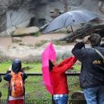 Zoo 2017 (82)